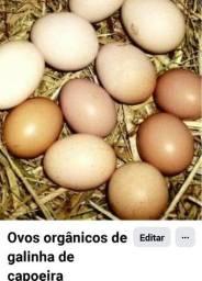 Ovos orgânicos de galinha de capoeira