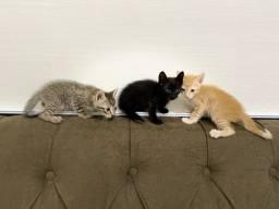 Gatos Filhotinhos
