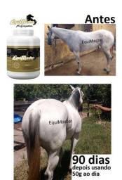 Cavalos de Competição -  Crescimento - Manutenção
