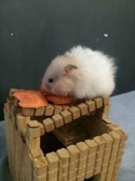 __ Hamster __