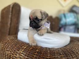 Pug Femea com pedigree! 10x no cartão
