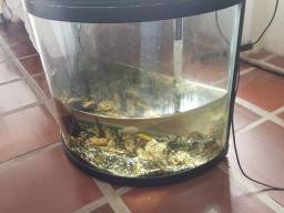 Aquario curvo 82 litros