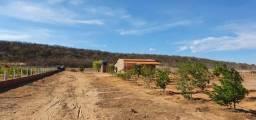 Chácara localizada no N7 - 65mx130m