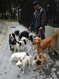 Passeio de Cães