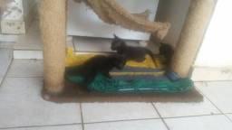 4 gatinhos filhotes