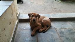 9491e870c1 Cachorros - São José Dos Campos