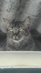 Doação de gatos lindos, castrados, vermifugados e vacinados