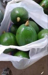 Título do anúncio: Vendo abacates fresquinhos 1 real cada...colhido direto do pé...faça  já  sua encomenda!