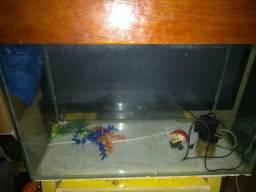 Vendo aquario 140l