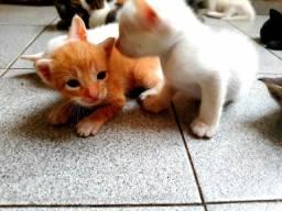 Adoção de felinos