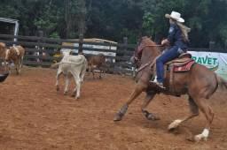 Cavalo Quarto de Milha (QM) com documento