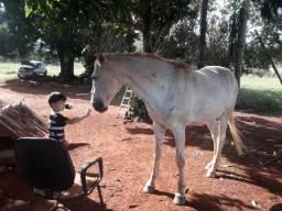 1.000,00 vendo ou troco cavalo branco lindo de montaria