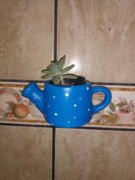 Vasinhos de parede c mini planta