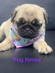 Título do anúncio: Linda fêmeas de Pug super companheira