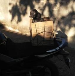 Rede Elástica Moto / Bagageiro / Capacete - 35x35 Preta