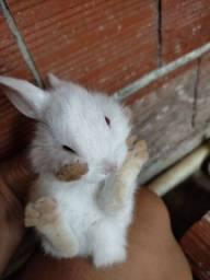 Título do anúncio: Vendo esses filhotinho de coelho r$ 30 cada