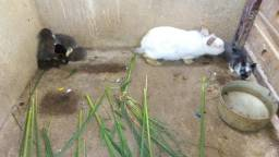 Filhote coelho