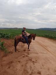 Cavalo bom