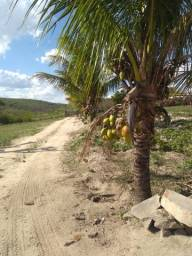 Compre Sítio localizado em Lagoa de Seca: