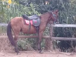Vendo cavalo piquira.
