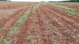 Fazenda 510 Hectares Plantando Lavoura - Lucas do Rio Verde - MT