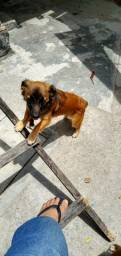 Cachorros filhotes para adoção