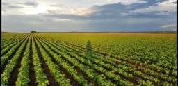 Arrenda se 5100 hectares para plantio de soja em Paranatinga - MT