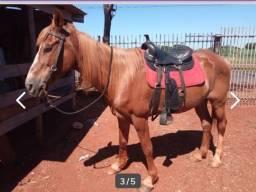 Vendo cavalo pra montaria
