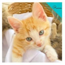 Título do anúncio: Gatinhos Lindos e Vacinados!