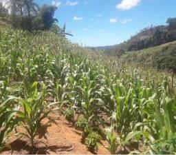 Credito Agrícola, Rural, Plantações, Produtos Quimicos, Sementes