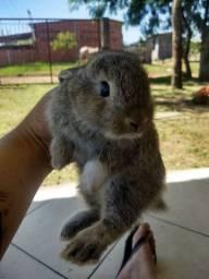 Vendo coelhos filhotes