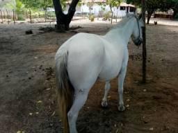 Vende-se cavalo Machador