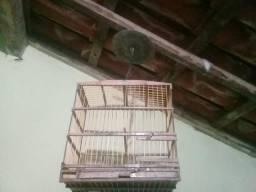 Duas gaiola cibiteiras