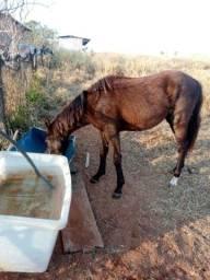 Título do anúncio: Vendo cavalo com 1 ano e 3 meses !!