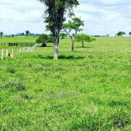 Área rural med. 200 hec pronta para lavoura.