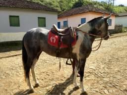 Cavalo Pampa Mangalarga Marchador