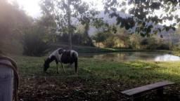 Égua panpa e potro paulista