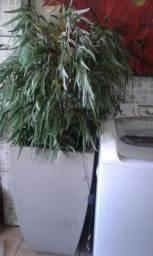 Uma planta linda com vaso