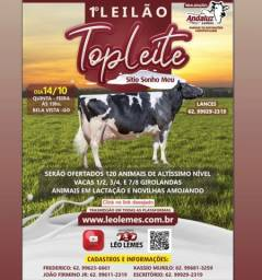 Título do anúncio: Leilão gado leiteiro