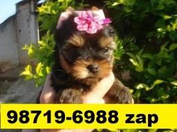Canil Líder Cães Filhotes BH Yorkshire Poodle Maltês Beagle Basset Lhasa Shihtzu Bulldog