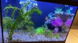 Vendo aquário 25 litros