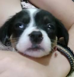 Filhote de cachorro pra doação