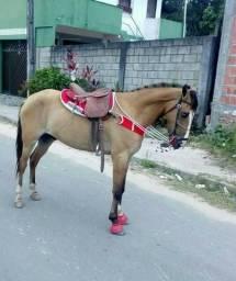 Vendo cavalo de Largo