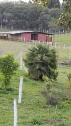 Arrendamento Barracão Hotelaria cavalos Baias Cocheira. Aluguel
