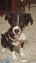 Cãozinho saudável e lindo para adoção!