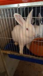 Vendo um casal de coelho 45cada um ou troco por outro animal do meu interesse