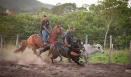 Título do anúncio: Cavalo PO. Filho de Don Toro