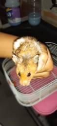 Doaa-se hamster com gaiola são 2