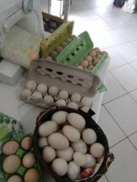 Ovos de pata 20,00 a duzia