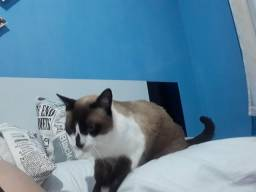 Procura-se gato